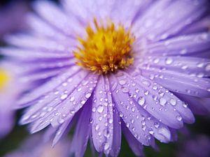 Regendruppels von Brigitte Hofman-Balfoort