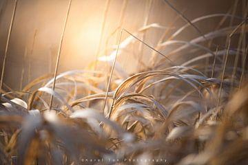 """Winter grass"" van Karel Ton"
