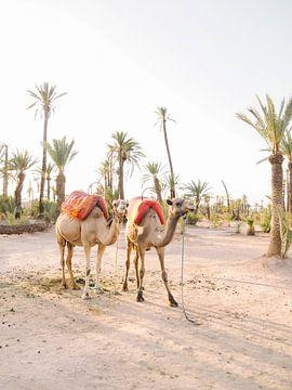 Kamelen in Marrakech van Marjan Kouwenhoven