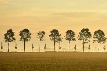 Trees in line van Henk de Boer