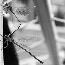 Libelle sur Stefan  Nanninga