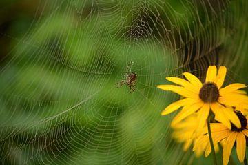Spin in web met Rudbeckia in de achtergrond. van Inge van Dam