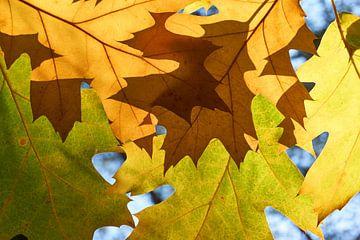 Herfstbladeren von Harry Wedzinga