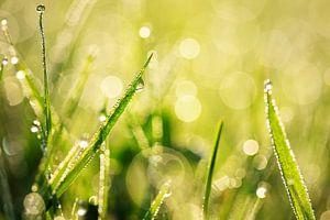 dew on a meadow