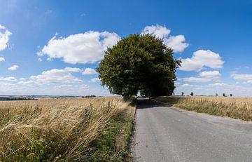Weg die tussen de graan velden doorloopt met grote eiken bomen in het landschap van Dorset Engeland  van Leoniek van der Vliet