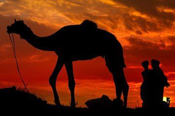 Pushkar Camel Market van Johan Ensing