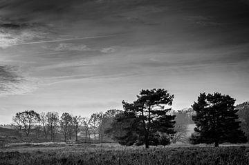 Een paar bomen van Boudewijn Tempelmans