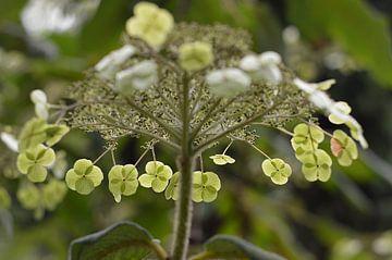 Bloemen 14 van Miriam Duda