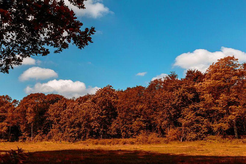 Open veld met bomen in Heiloo van Jaap Mulder