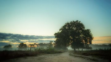 Dawn at your feet van Lex Schulte