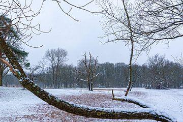 doorkijkje op boom in de sneeuw van Merijn Loch