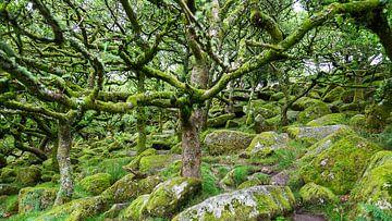 Bos in Dartmoor van Dick Doorduin