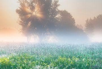 Ein farbenfroher Sonnenaufgang in Brabant von Nancy Carels