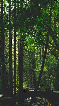 Yosemite von Michelle van den Hondel