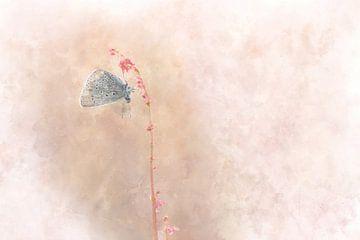 Schmetterling 10 von Silvia Creemers