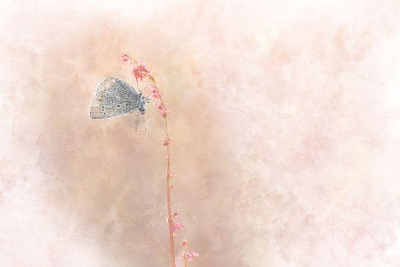 Vlinder 10 van Silvia Creemers