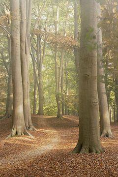 Follow the Path sur Martijn van Geloof