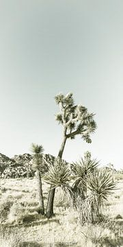 Joshua Tree | Vintage Panorama van Melanie Viola