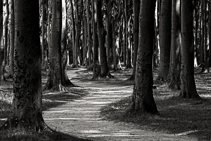 Forest van Frank Herrmann