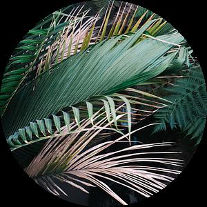 Moody, botanische print van tropische palmbladeren van Raisa Zwart