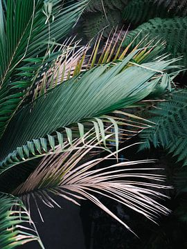 Moody, botanische print van tropische palmbladeren van