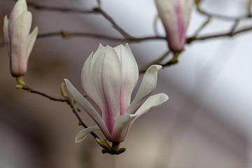 Blüte von Bas Groenendijk