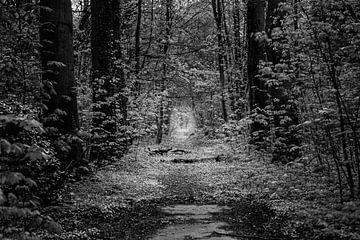 Licht in het bos van Marco Schep