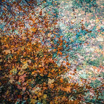 Blätter in allen Farben des Herbstes von Idema Media