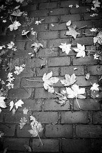Herfst van Nouchka Est