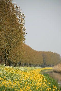 Collors van Marcel van Rijn