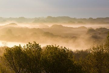 Morgennebel über der Seedüne von Menno van Duijn