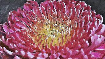 Chrysant Bloem Roze - Geschilderde Tekening van Schildersatelier van der Ven