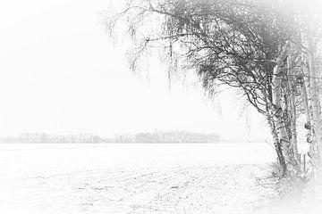 Birke im Schnee. von Anita Lammersma