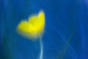 gele boterbloem von Ronald Jansen