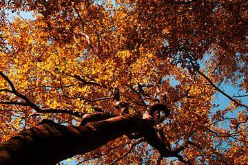 Autumn leaves van