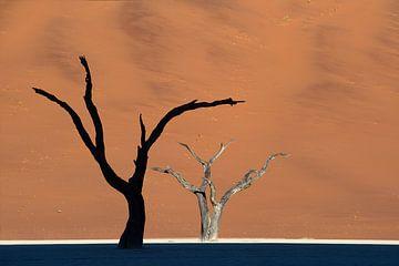 Zon en Schaduw- Namibië van Jos van Bommel