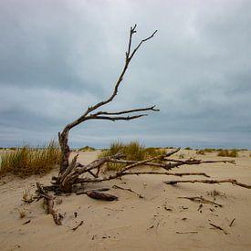 Strand Ameland, toter Baum von Nynke Altenburg