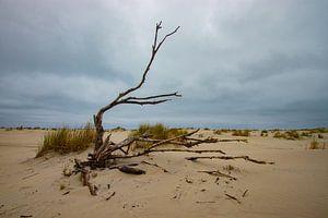 Strand Ameland, toter Baum