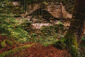 Jungle in de herfst
