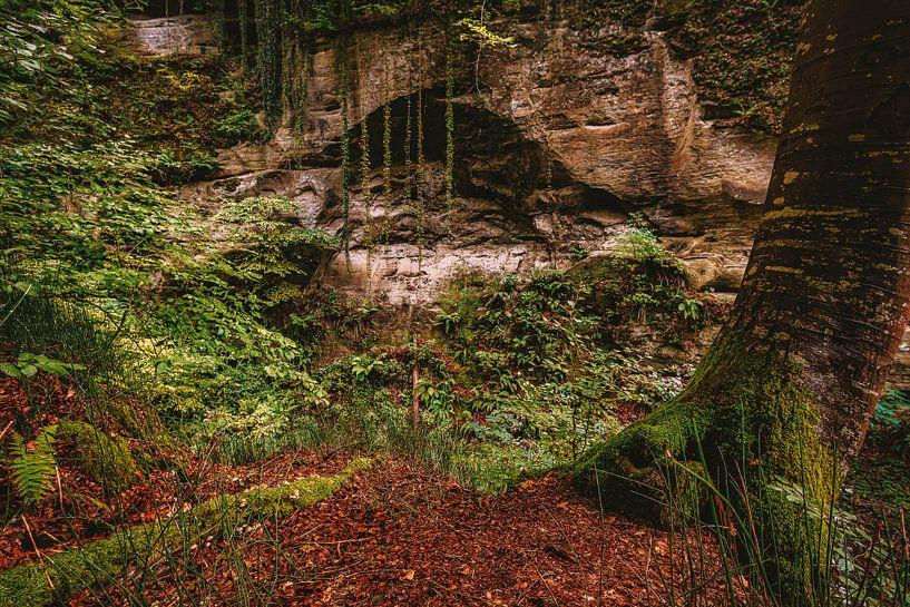 Jungle in de herfst van MindScape Photography