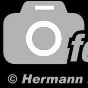 Hermann Kollinger Profilfoto
