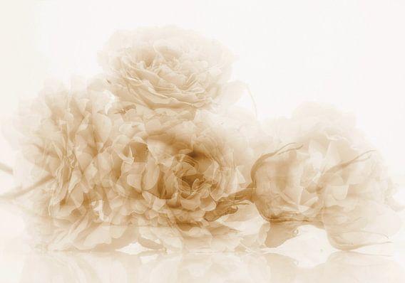 Roses anciennes van Martine Affre Eisenlohr