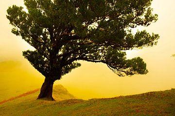 Baum auf Madeira von jonathan Le Blanc