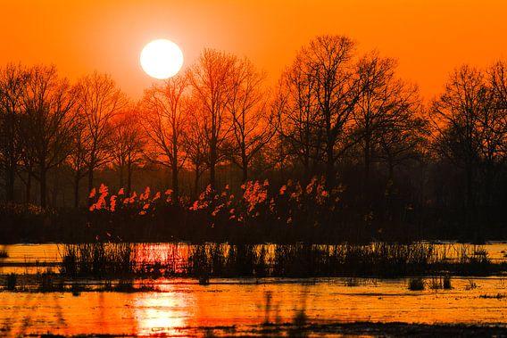 Zonsondergang in oranje tinten