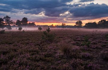 Zonsondergang en mist in de Kampina van