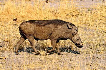 Warzenschwein/Nasenwild von Merijn Loch
