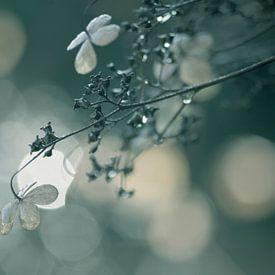 Delicate van bird bee flower and tree