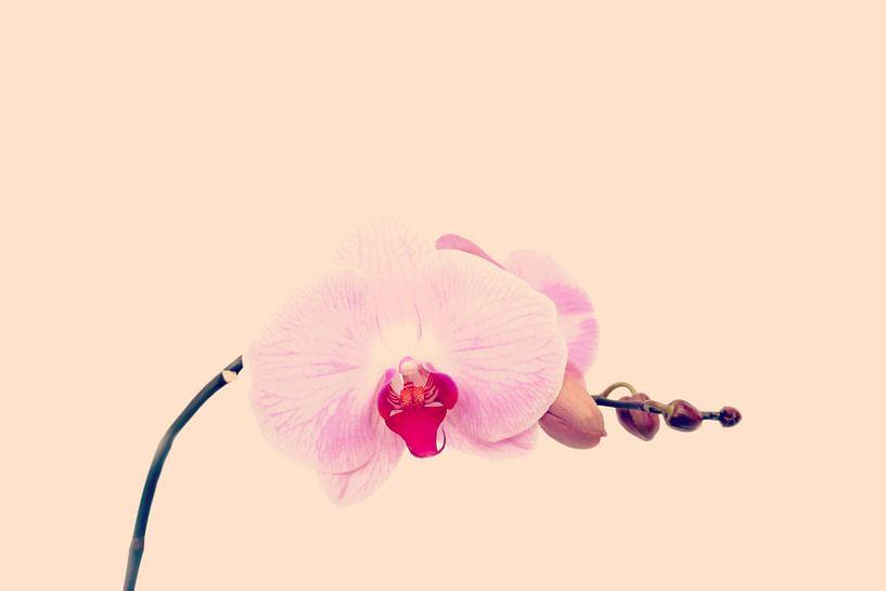 GENTLE ORCHID I van Pia Schneider