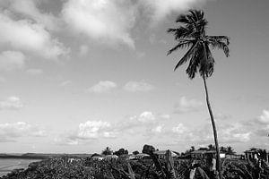 Palmboom - Alcantara, Brazilië van Adriano Oliveira