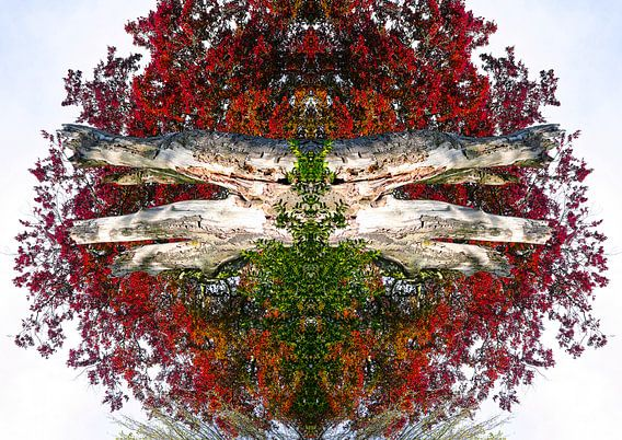 Rood gekleurde boom kunstwerk